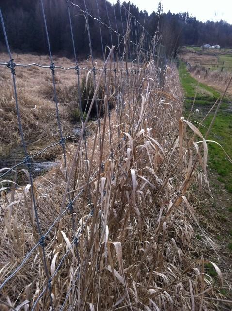 farm_grassroad
