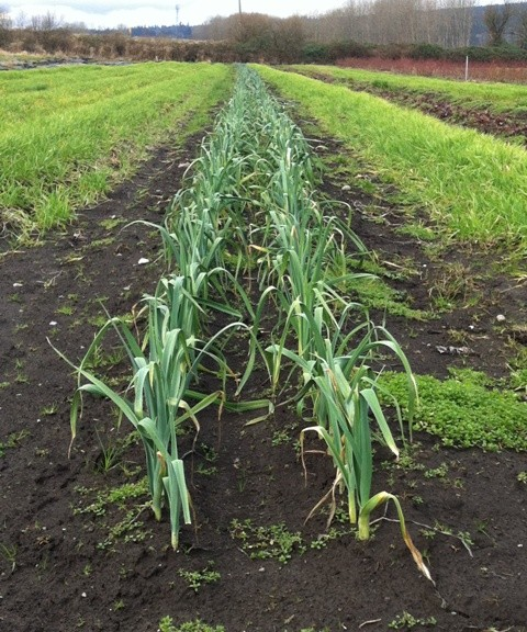 farm_rowcrop