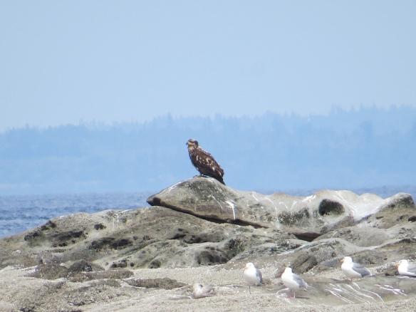 SI_eagle