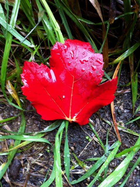 leaf_rain