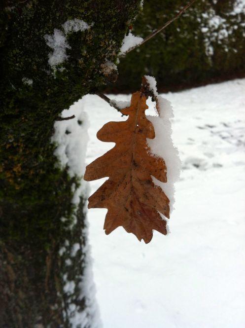 leaf_memo