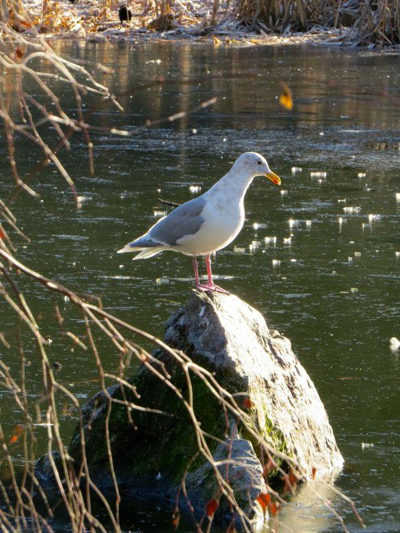 seabird2