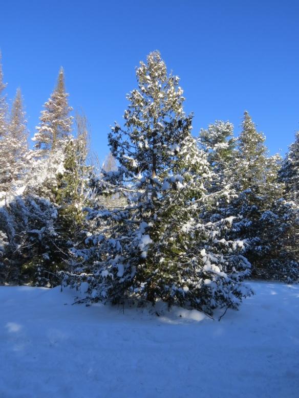 winter_tree