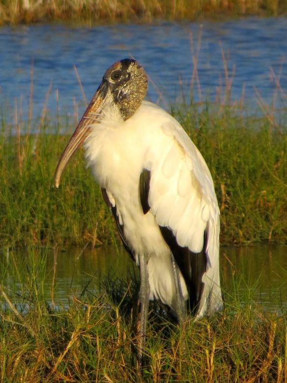 Everglades4