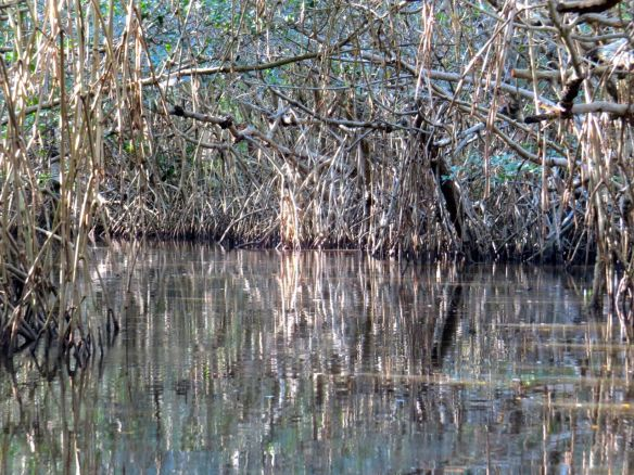 Everglades8