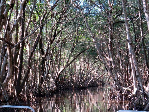 Everglades9