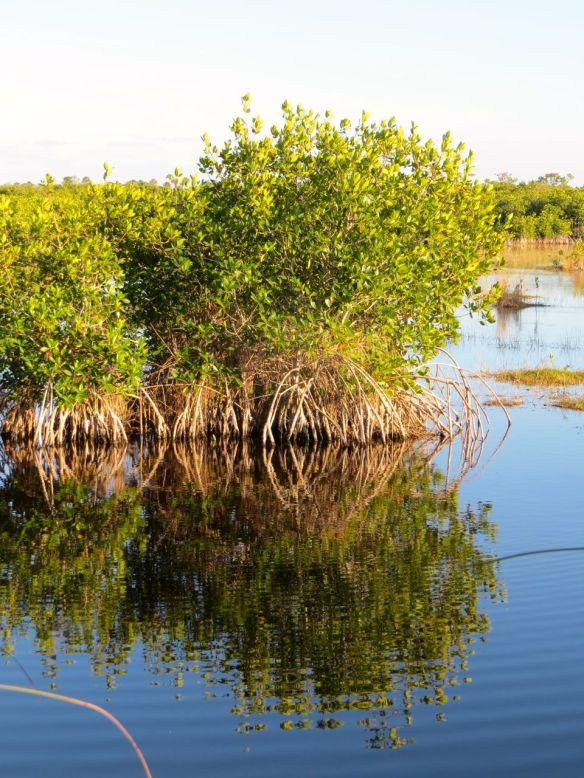 mangrove_island