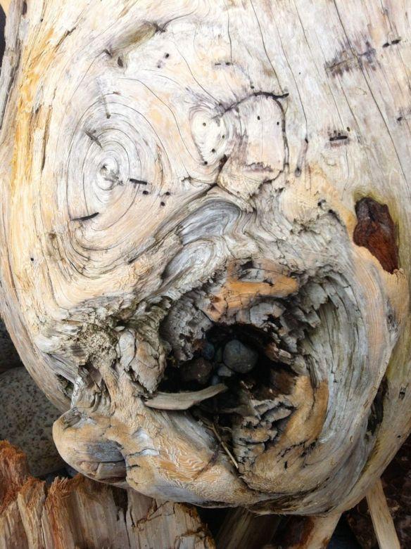 driftwood4