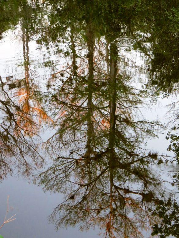 Reflection_Everglades