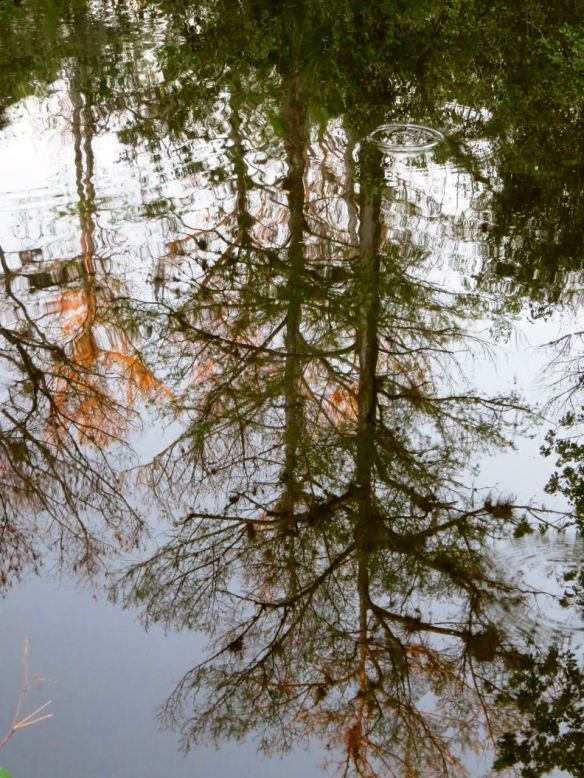 Reflection_Everglades