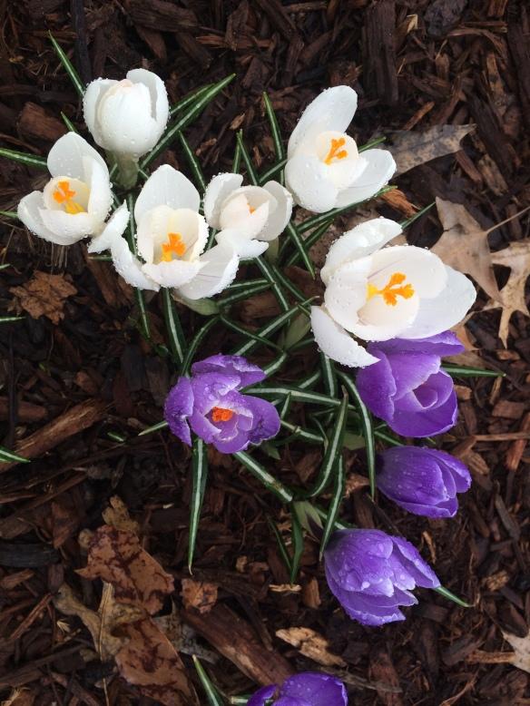 spring_centralpark