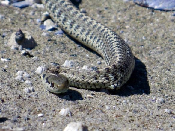 snake_eyes