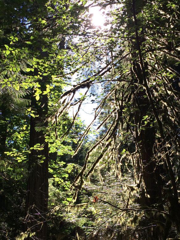 sunlight_rainforest