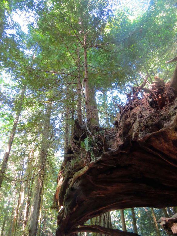 tree_on_tree