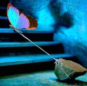butterfly-rock