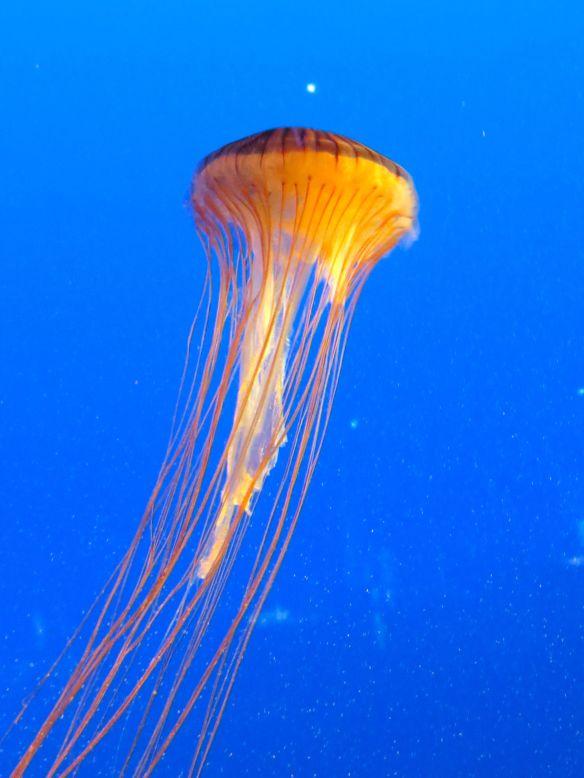 jelyfish1.jpg
